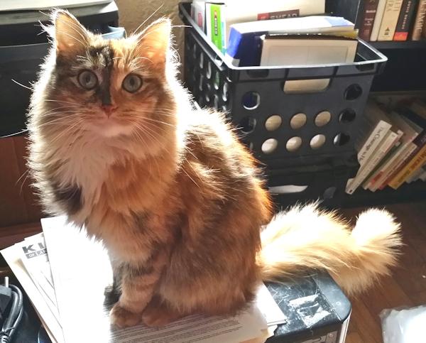 The authors missing cat, Luna